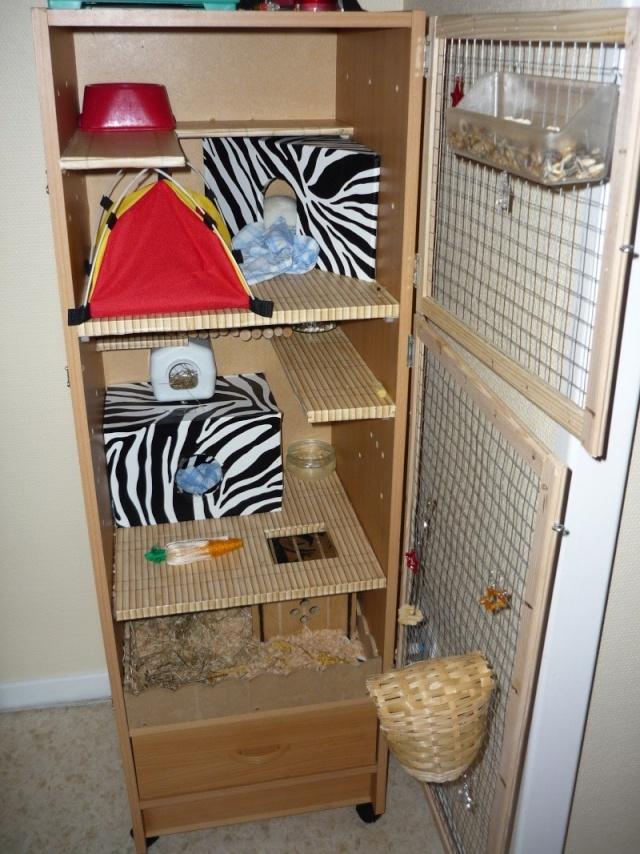 Photos de vos cages - Page 3 P1060010