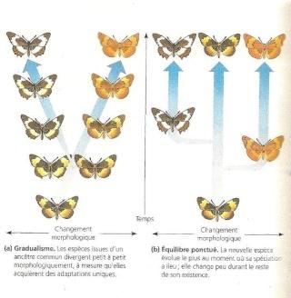 [SD]La théorie de l'évolution ? Phylog10