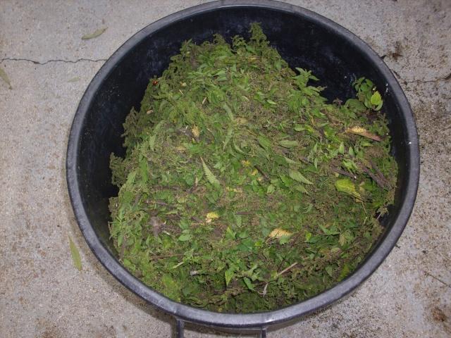 Cueillette et récolte de graines d'orties Img_0013