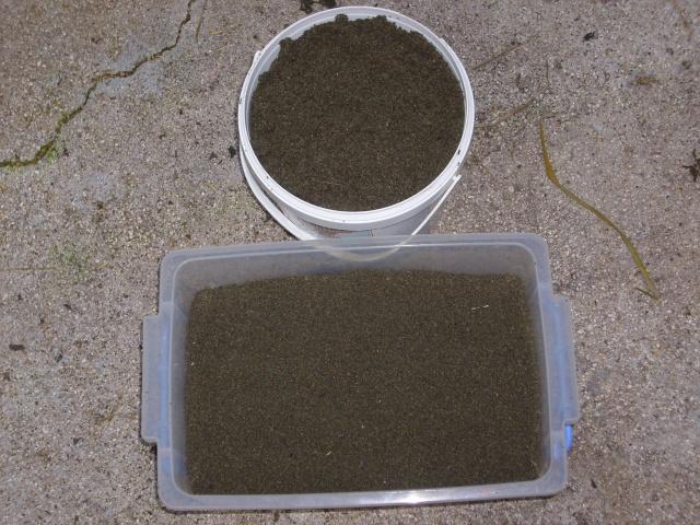 Cueillette et récolte de graines d'orties Img_0014