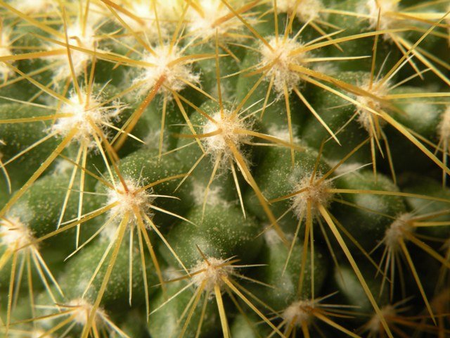 The Mammillaria Society Seeds distribution 2007 Canele12