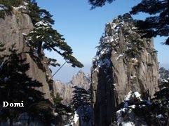 La Chine sac au dos (14): Ascension du Huangshan 黄山 sous la neige les 9 et 10 février 2008 1_pins10