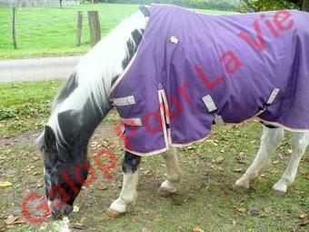 LADY - ONC née en 1987 - adoptée en janvier 2011  par Mélanie Lady_c12
