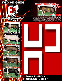 Purebreed Hamp and Dark Cross For Sale Topofo10
