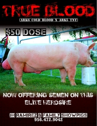 show pigs for sale Truebl11
