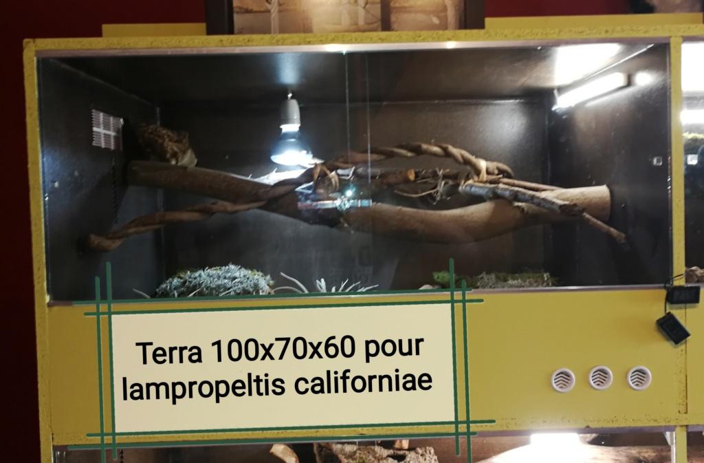 Terra lampropeltis Img_2027