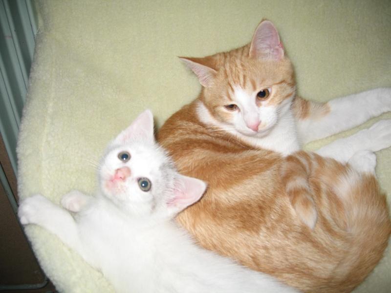 Florette, jolie petite blanche avec quelques tâches  - chaton 2010 Floret22