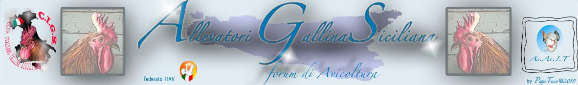 GallinaSiciliana