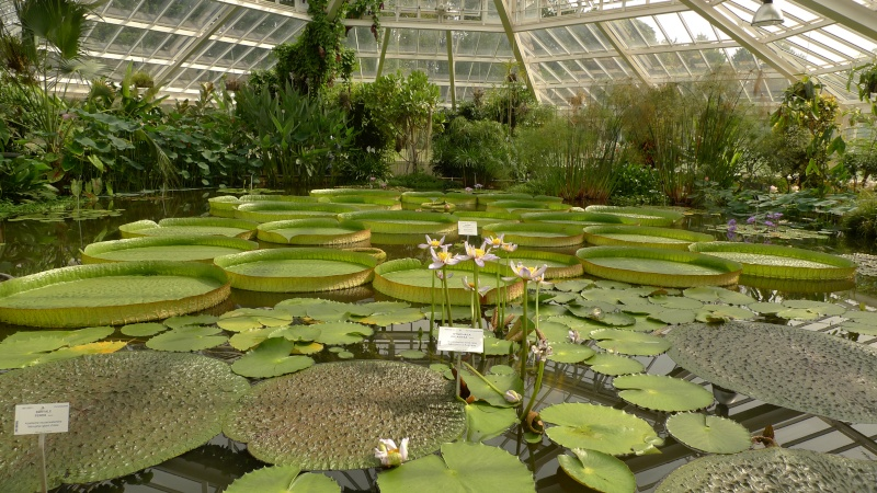 J'ai envie de vous parler du... Jardin Botanique... P1070317