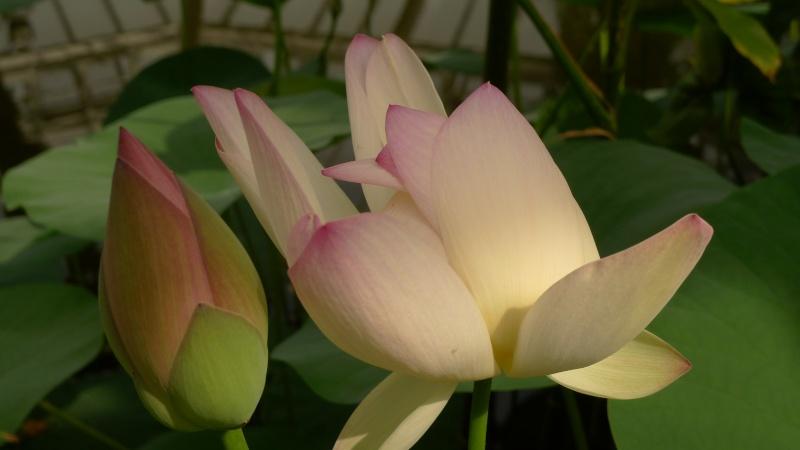 J'ai envie de vous parler du... Jardin Botanique... P1070318
