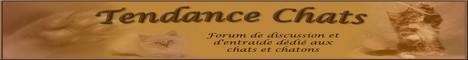 Proposition de partenariat avec Tendance Chats.  Image_11
