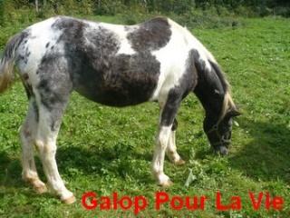 LADY - ONC née en 1987 - adoptée en janvier 2011  par Mélanie Lady3110