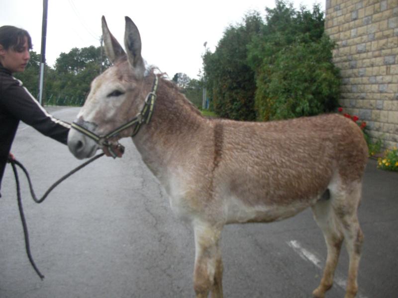 ZEBULON - ONC âne né en 2008 - adopté en octobre 2010 par Anita - Page 3 Sany0012