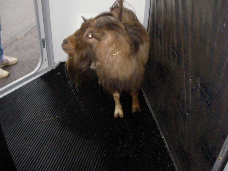 ZEBULON - ONC âne né en 2008 - adopté en octobre 2010 par Anita - Page 3 Sany0013