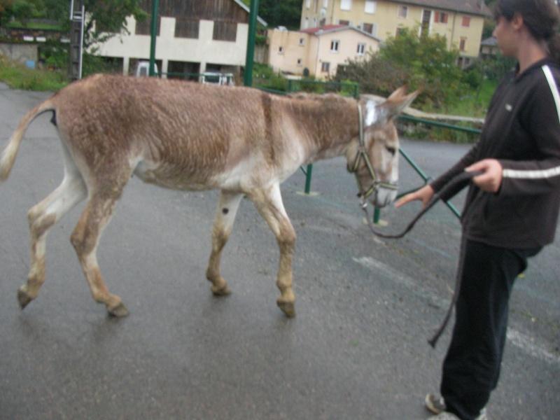 ZEBULON - ONC âne né en 2008 - adopté en octobre 2010 par Anita - Page 3 Sany0014