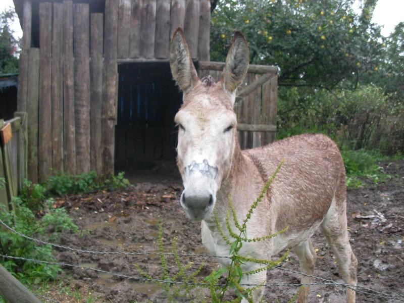 ZEBULON - ONC âne né en 2008 - adopté en octobre 2010 par Anita - Page 3 Sany0015