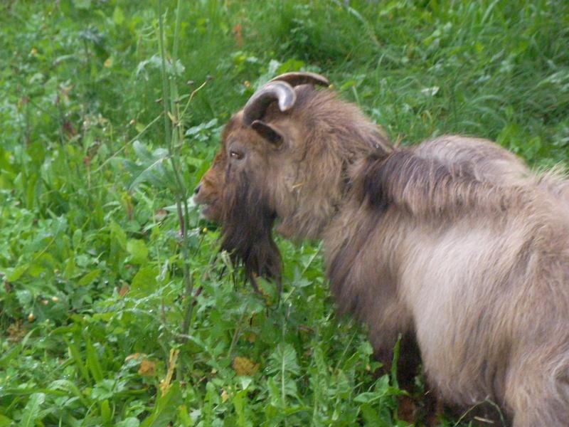 ZEBULON - ONC âne né en 2008 - adopté en octobre 2010 par Anita - Page 3 Sany0110
