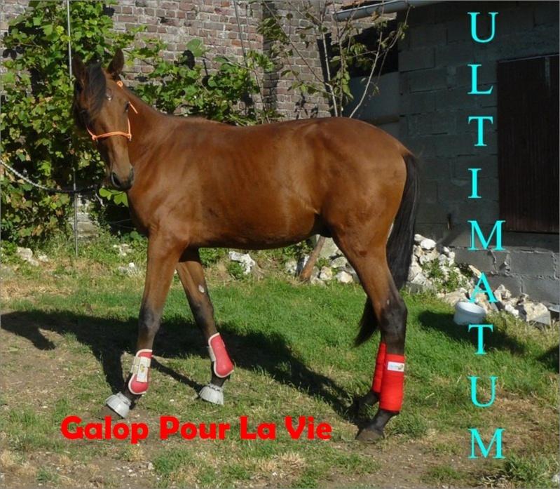 ULTIMATUM- TF né en 2008 - adopté en octobre 2010 par boussie Ultimo14