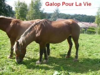 VIOLETTA - Trait Comtois née en 1987 - adoptée en janvier 2011 par Delphine Violet10
