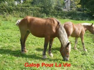 VIOLETTA - Trait Comtois née en 1987 - adoptée en janvier 2011 par Delphine Violet11