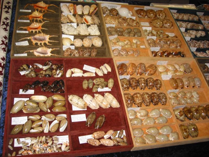 2010 Bourse de Toulouges / Perpignan - 16 & 17 octobre Img_8014