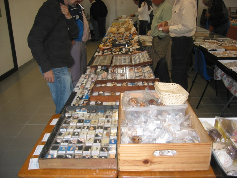 2010 Bourse de Toulouges / Perpignan - 16 & 17 octobre Vue_d_10