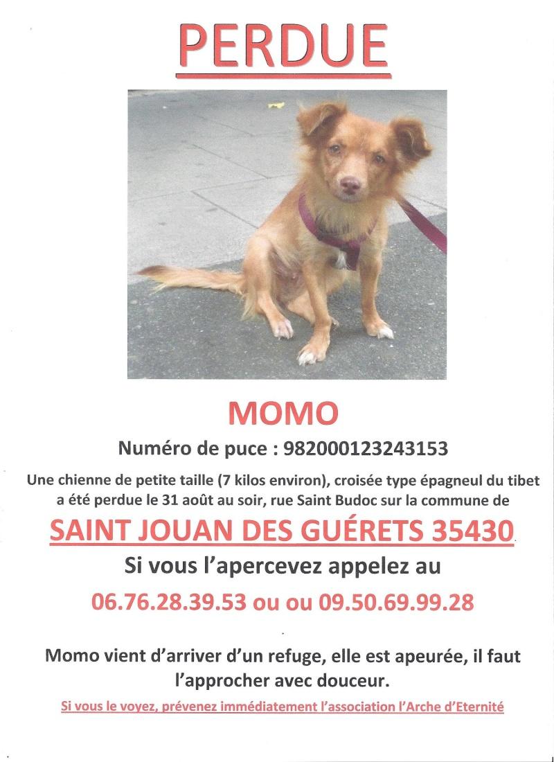 PERDUE-petite chienne MOMO à Saint Jouan des Guérets (morte) Momo1010