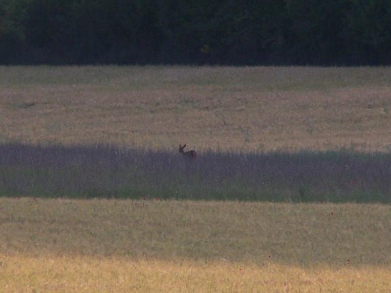 les odeurs a la chasse ... Photo_23
