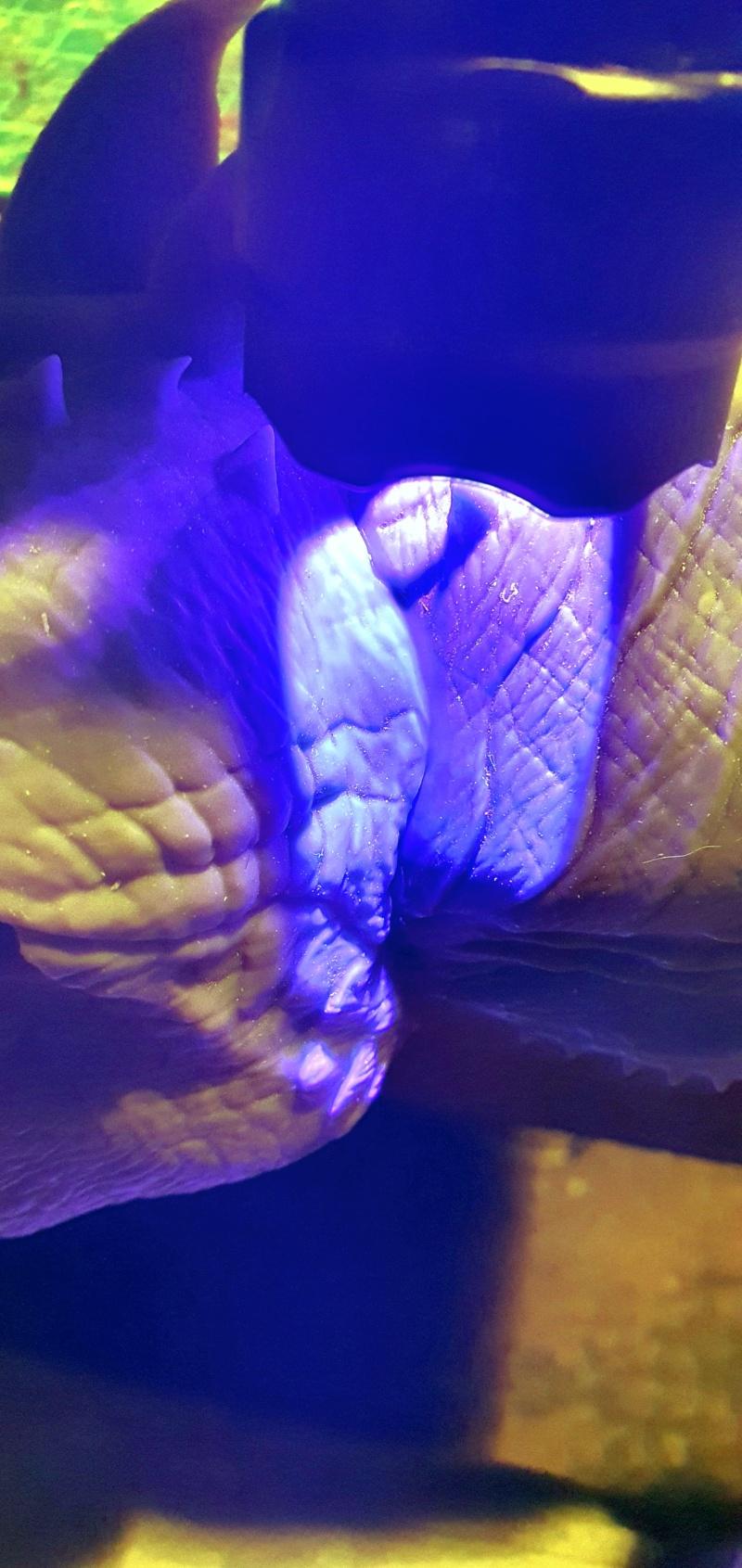 Emmerichs Gozilla von 1998, 1:250, Resin 3D Druck von Gambody 20211377