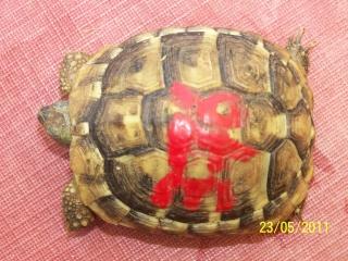 Adoption d'une petite Hermann née en 2008 23-05-15