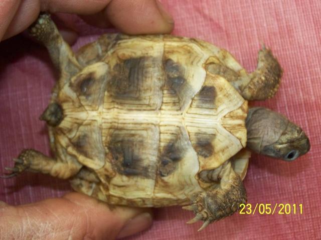 Adoption d'une petite Hermann née en 2008 23-05-16