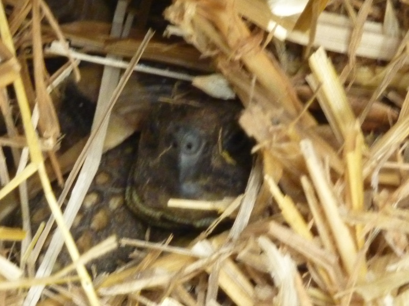 hibernatus...hibernation.... P1040110
