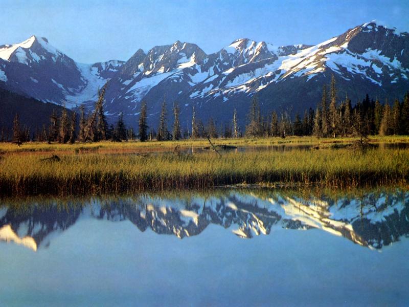 Лес, окружности Alaska10