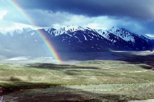 Лес, окружности Alaska13
