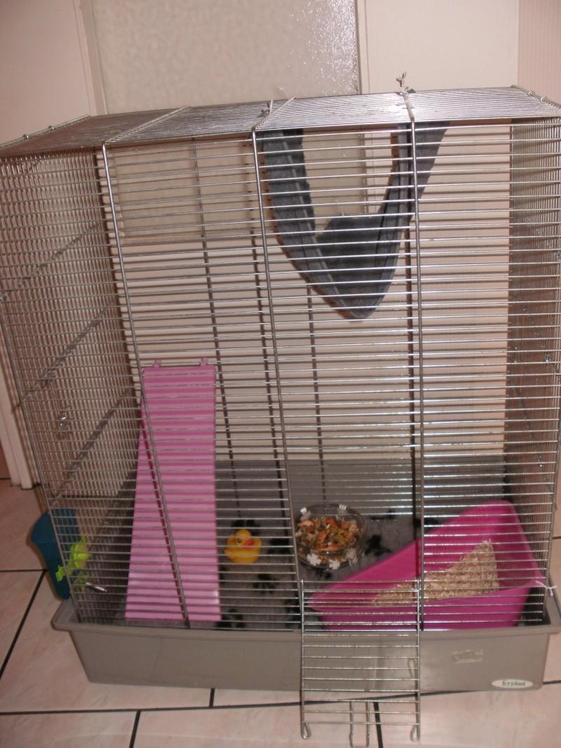 Leur cage et leurs nouveau accessoire (drybed, plateforme..) P9130111