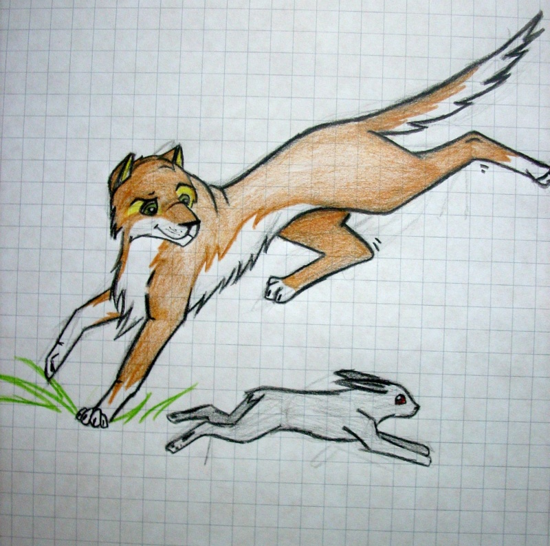 Crush (My first caricature fox) Dscn0811