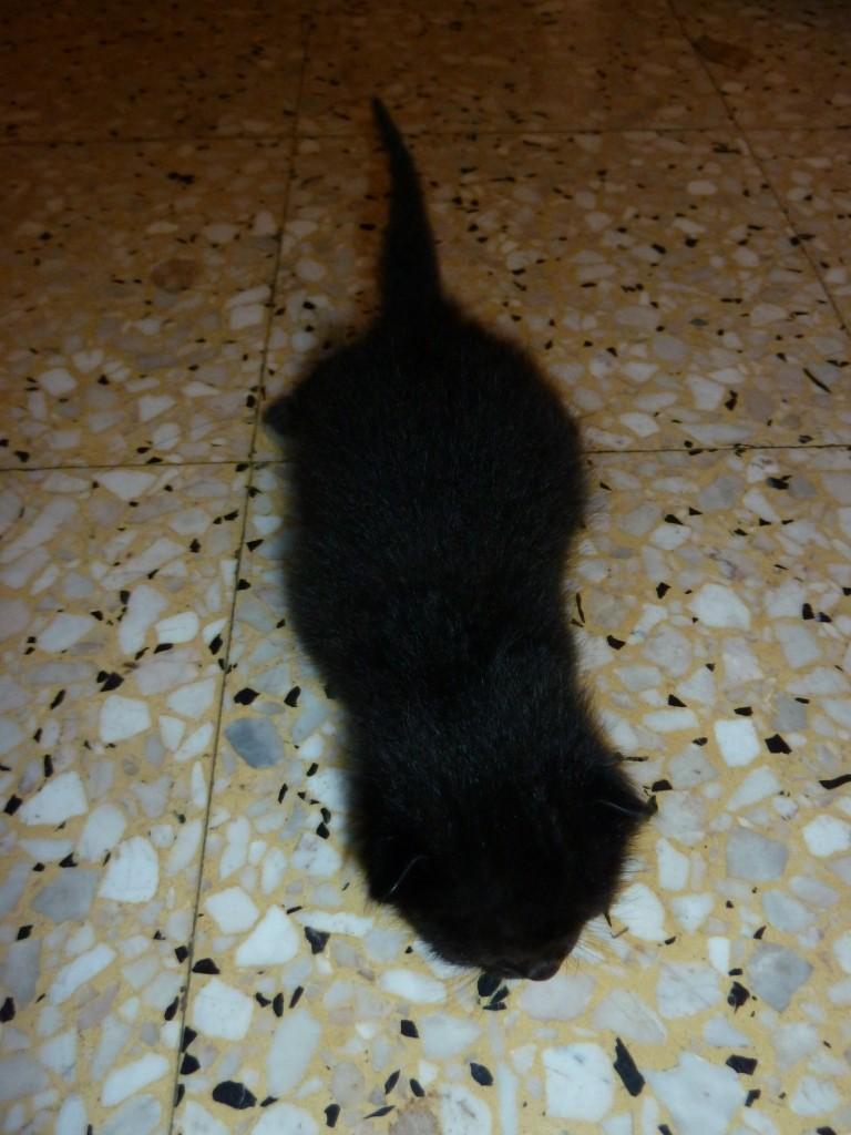Qui veut adopter un petit chat ? - Page 2 P1130712