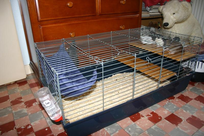 Ré-aménagement d'une cage à cobaye ! Cage_r10