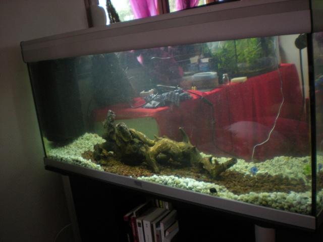je veux un aquarium économique et atypique Dscn1510