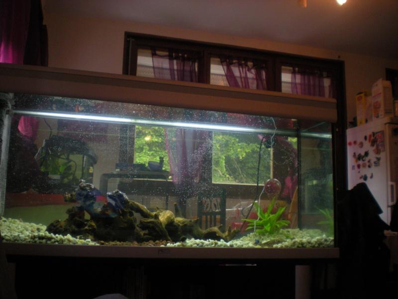 je veux un aquarium économique et atypique Dscn1511