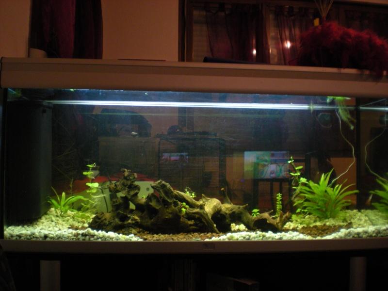 je veux un aquarium économique et atypique Dscn1512