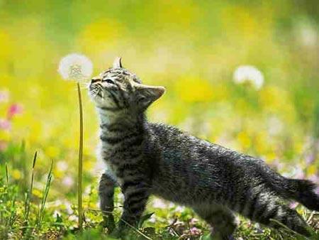 Bonne Mercredi Cat-fl10