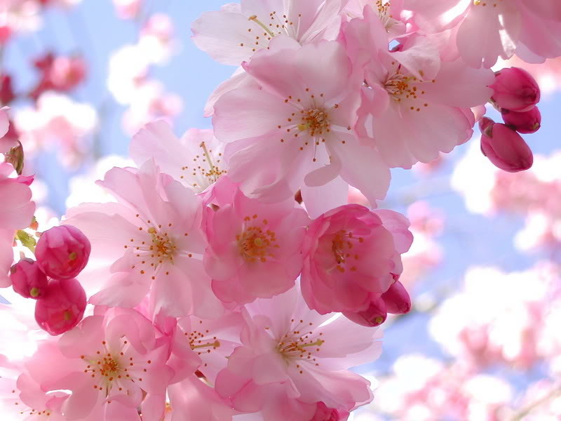 Bonne Vendredi Spring10