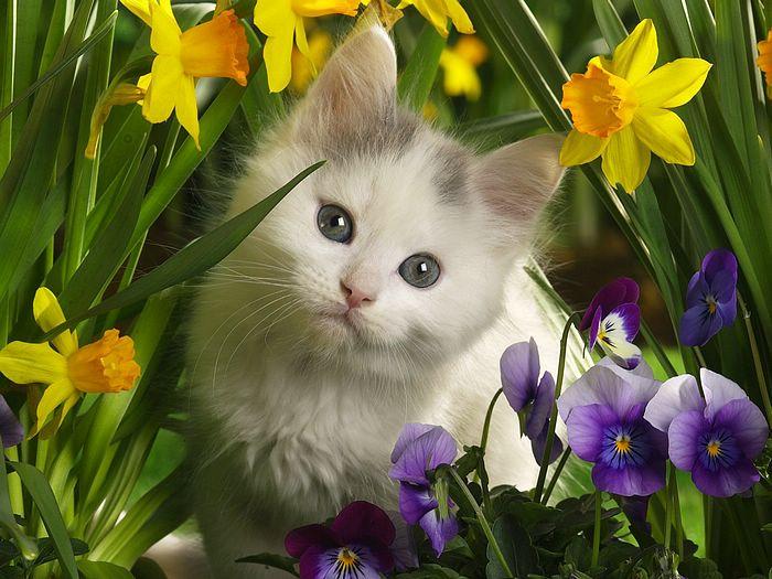 Bonne Mercredi Chat_b10