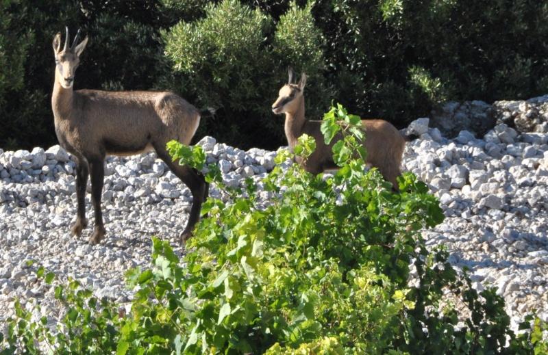 Belles photos d'animaux c'est ici !  - Page 4 Dsc_0910