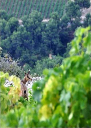 Belles photos d'animaux c'est ici !  - Page 4 Image011