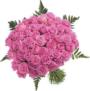 salut a tout le forum - Page 2 Roses_10