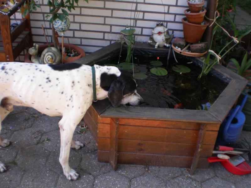Nouvelles des chiens partis le 13 Mai 02_06_10