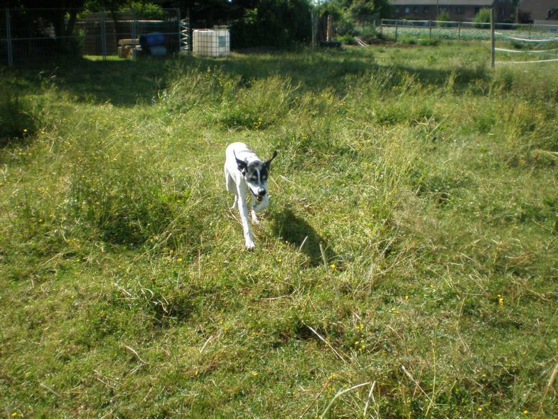 Nouvelles des chiens partis le 13 Mai 02_06_11