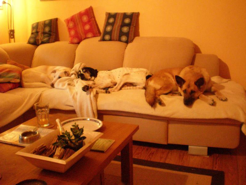 Nouvelles des chiens partis le 13 Mai 18_05_10